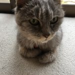 猫の腕組み撮りそこねた