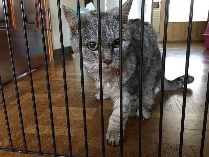 猫の転落防止にゲートをやっと設置した