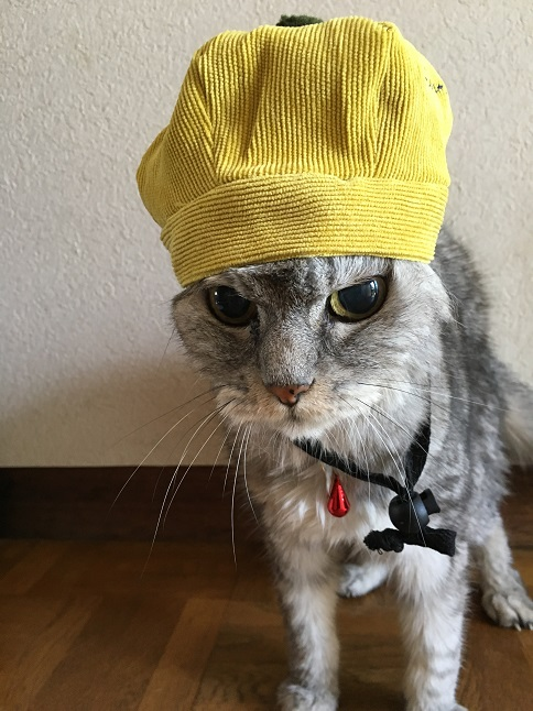 せっかく買って貰った猫用帽子が小さすぎて不細工になった件