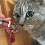 猫がハゲた原因→首輪と判明→メーカー名出しちゃってます