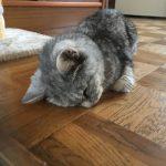 猫の行き倒れ?寝落ち?それともごめん寝?