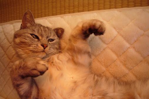 老猫の身体能力テスト&可愛すぎる昔のミル見て!!!