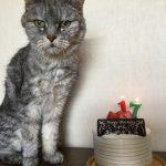 ミルは今月17歳の誕生日を迎えました!