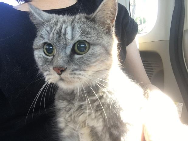 動物病院を受診した猫◇膀胱炎でした