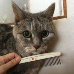 老猫で毛づくろいしなくなったので『美容室kicca』始めました