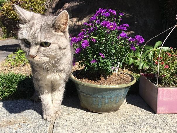 バッタに気づかない猫と嬉しい反応
