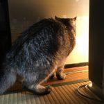 老猫が立て続け3回目の膀胱炎 原因は冷えだって