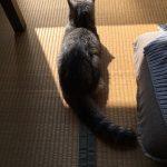 ひさしぶりの場所で日向ぼっこしている老猫に留守番させてたら
