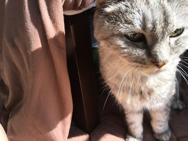 猫の為だけにこたつ布団を出した