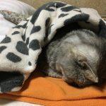 猫の寝息が聞こえてきて振り返ったらまたごめん寝