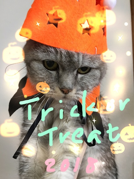 ハロウィン2018 仮装する猫