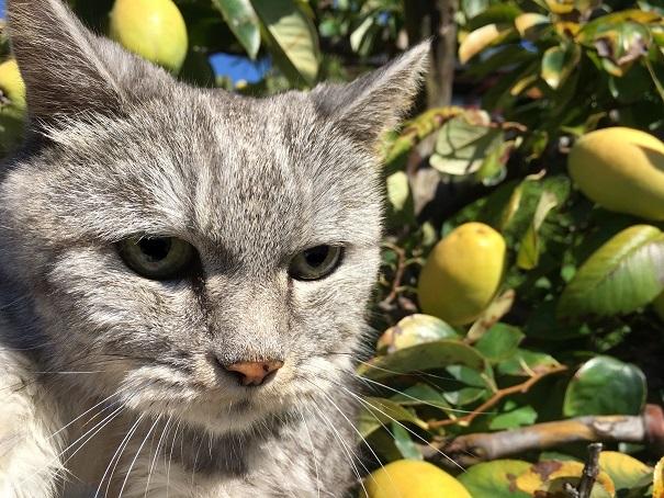 蔵出しと老猫を写真で撮る時の問題点