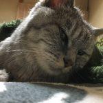 老猫が頭を震わせる異変が起きて慌てた件