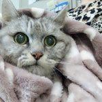 猫の傾きが気になって動物病院受診<血液検査あり>