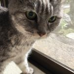 老猫になって覚えた言葉「ごあ~ん」を今日は刺身で!w