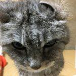 猫の耳は敏感と見せかけて鈍感?