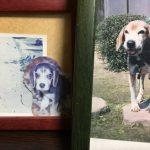 11月22日わんわんにゃんにゃんの日は私の最後の犬『テリー』の命日