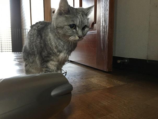 犯にゃんは現場に戻る ~老猫のおしっこドライヤー編~