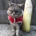 今冬初コート着て散歩に出かけた猫《動画あり》