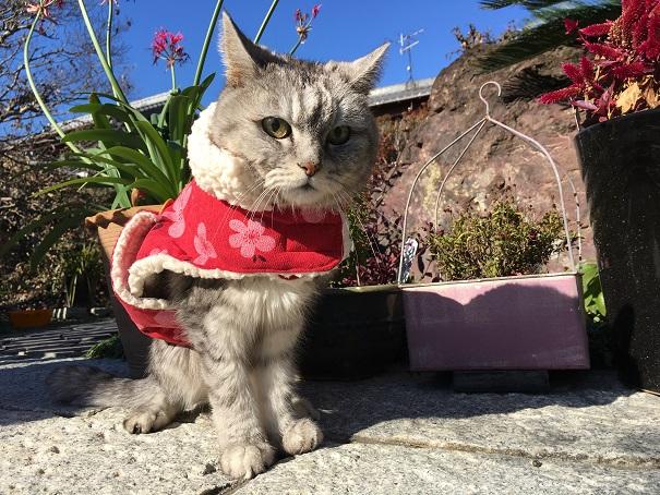 猫の散歩状況と真夜中の徘徊についてぶつぶつ