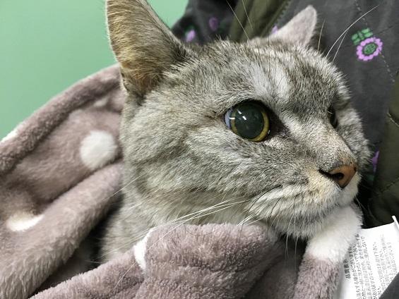 老猫が苦しそうに呼吸をするので受診|足の異変と甲状腺についても