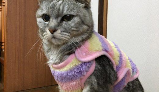 老猫の寒さ対策に楽ちんに着せられる着る毛布2枚買ったよ