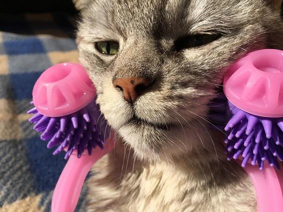 猫の美容ローラー?!<キャティマン>全身マッサージ術にゃんこの癒し