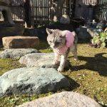 猫の散歩はじめ '2019