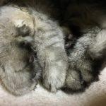 大好きな猫の肉球の臭いが(T∇T)