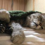 猫のまぬけな寝顔と下から見た顔