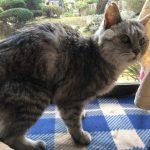老猫をシャンプーして泣きながら乾かす