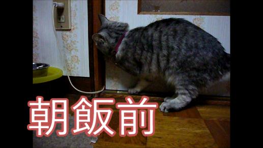 【動画】戸を開けるのなんて朝飯前の猫