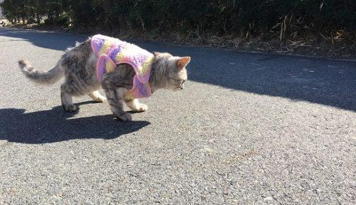 【動画あり】暖かい日だけ散歩に行く老猫
