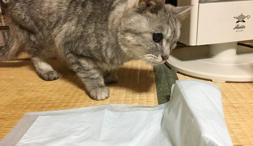 老猫のおもらしをきっかけにさっき起きた大惨事