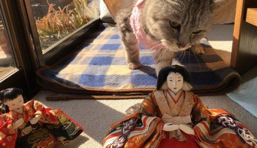17歳の老猫に今年もひな人形出した '2019