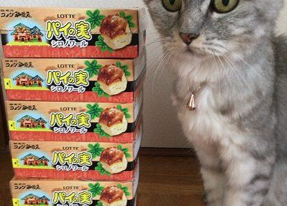 【動画あり】ロッテパイの実×シロノワール×猫