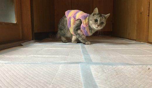 【動画】ごあ~んと喋る猫