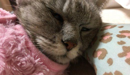 【動画あり】老猫の夜中の徘徊 |早い時間にぐーすかぴー