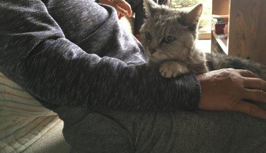 【動画あり】猫の顔がまだ腫れていたので動物病院受診