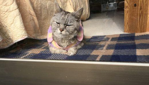 老猫のお留守番はマイペース&巨大毛玉