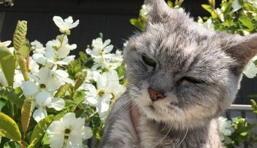 【動画あり】老猫と春の花 Part1