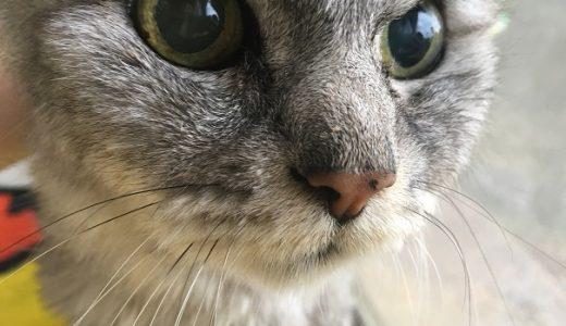 老猫の鼻が濡れている理由