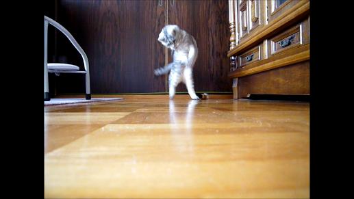 【動画】2008年 猫が立ったー!歩いたー!!
