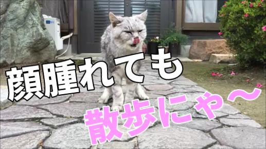【動画】散歩中に面白い顔の洗い方をする老猫