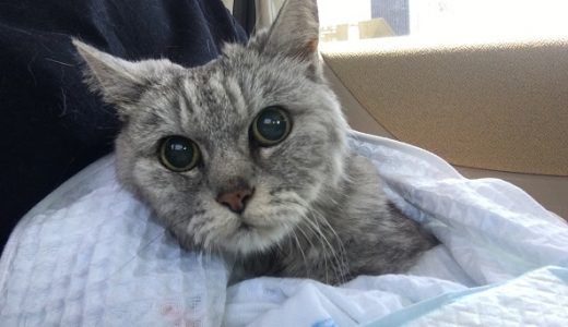 老猫の斜頸・足の具合・血液検査で動物病院受診