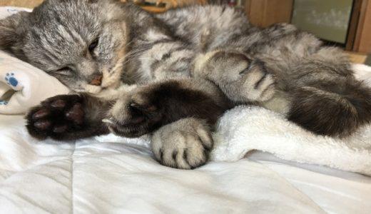 【動画あり】瞬膜キョロキョロさせながら昼寝する老猫