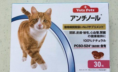 【動画あり】老猫の転倒にサプリメントのアンチノール始めました