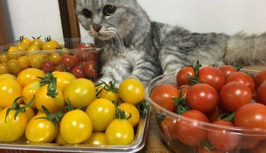 【動画】'2019夏 ひたすら猫とトマトvol.2 夏野菜シリーズ