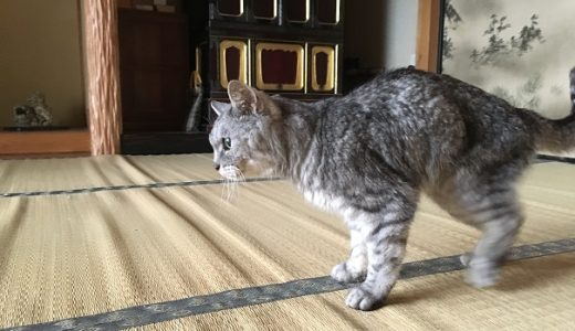 【動画あり】珍しく老猫が仏間をウロウロしてると思ったら・・・