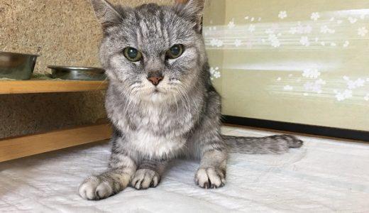 【編集あり】老猫の便秘~摘便後の異変について動物病院に問い合わせた